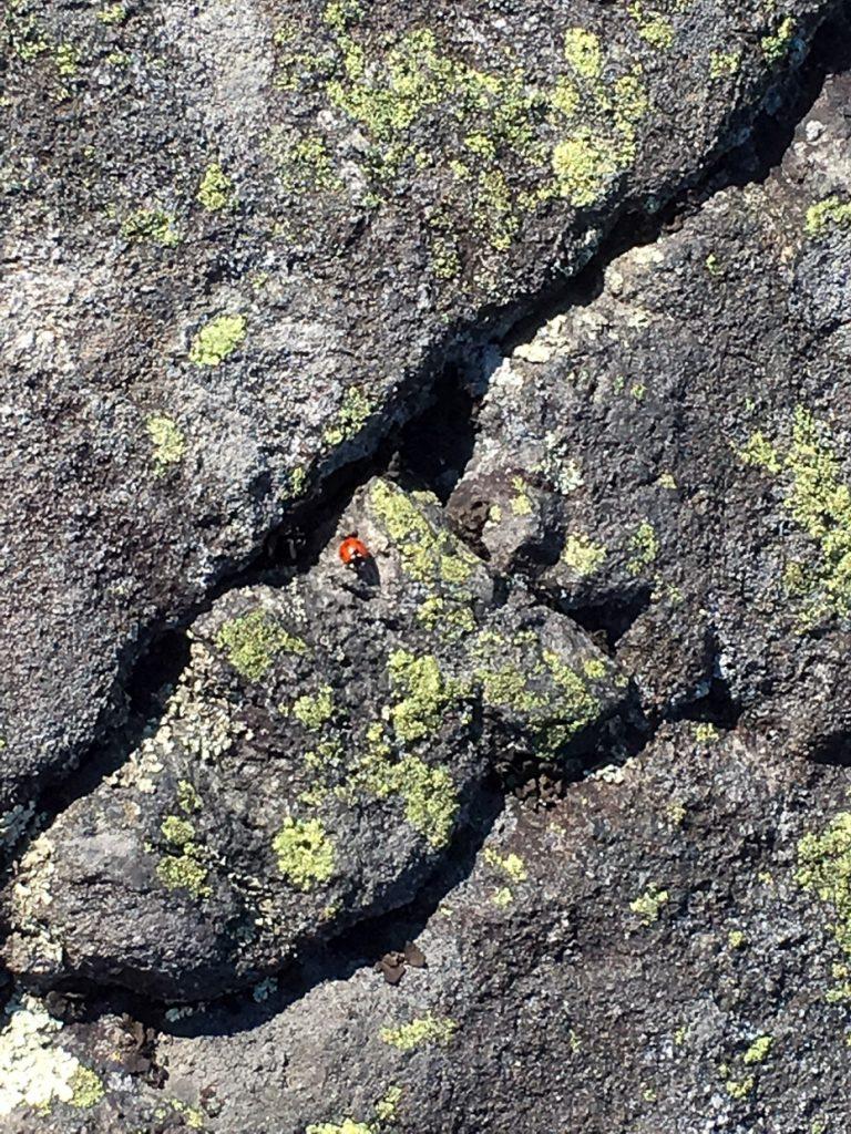 Leppäkerttu kalliolla